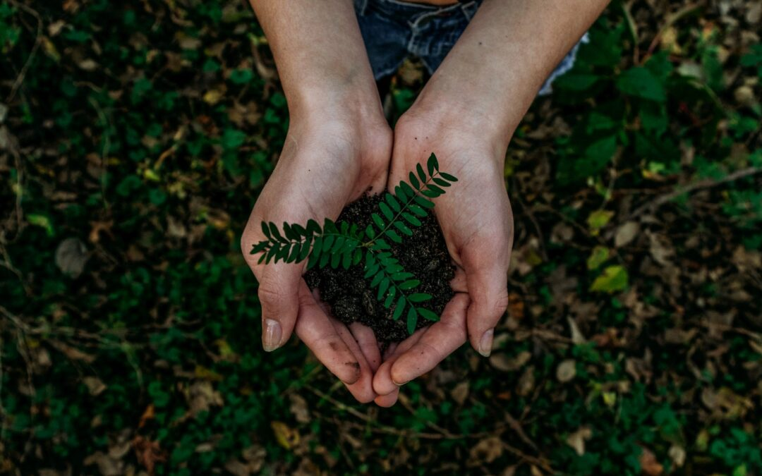 Moving Without Harming the Environment